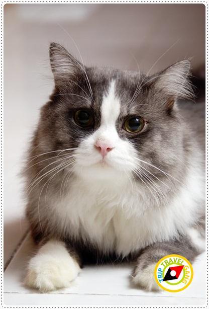 โรคแมว (6)