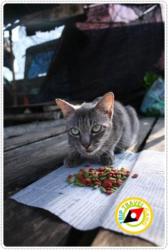 โรคแมว (8)