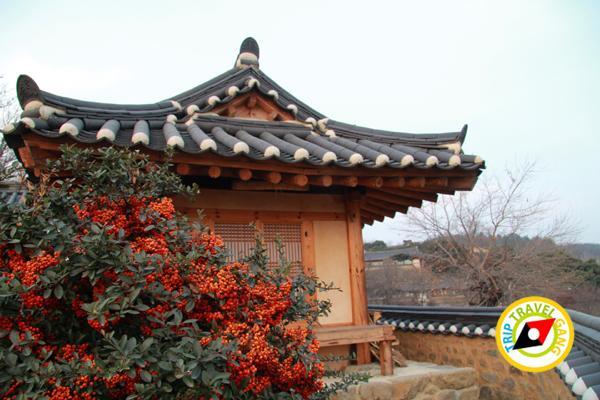 มรดกโลกเกาหลีใต้ (19)
