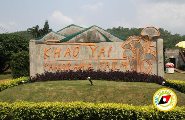 ท่องเที่ยว ที่เที่ยว เขาใหญ่ Khaoyai (20)