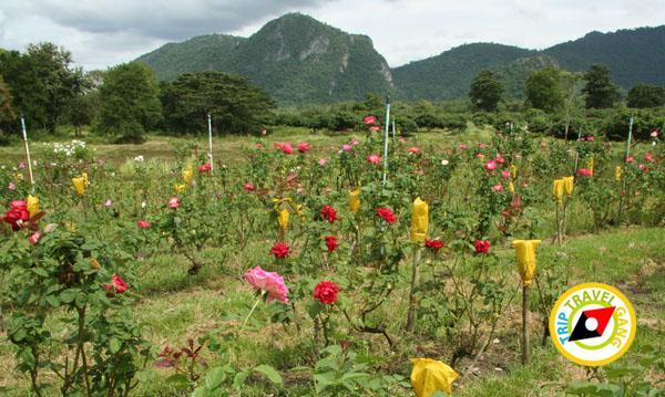 แหล่งท่องเที่ยว ที่เที่ยว เขาใหญ่ Khaoyai (3)