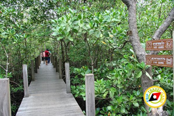 จันทบุรี ที่เที่ยว สถานที่ท่องเที่ยว แหล่งท่องเที่ยว สวย ทะเล (15)