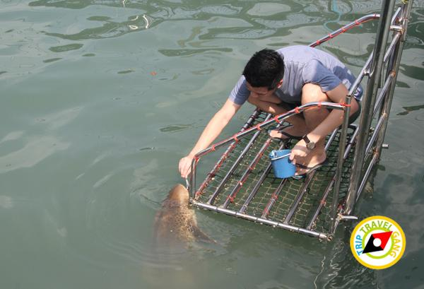 จันทบุรี ที่เที่ยว สถานที่ท่องเที่ยว แหล่งท่องเที่ยว สวย ทะเล (34)