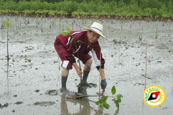 จันทบุรี ที่เที่ยว สถานที่ท่องเที่ยว แหล่งท่องเที่ยว สวย ทะเล (54)