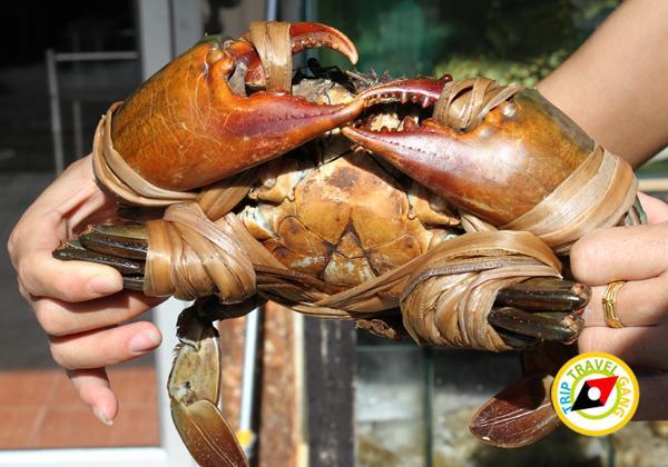 ที่พักโฮมสเตย์ กินปู นอนดูทะเล อร่อยไม่อั้นกับซีฟู้ดจัดเต็ม บรรยากาศดี สวย (2)