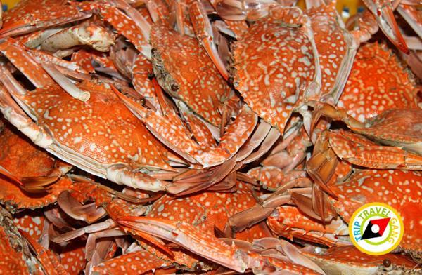 ที่พักโฮมสเตย์ กินปู นอนดูทะเล อร่อยไม่อั้นกับซีฟู้ดจัดเต็ม บรรยากาศดี (18)