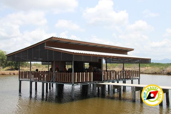 ป่าฝาดโฮมสเตย์ จันทบุรี (1)