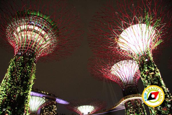 สิงคโปร์ (Singapore ท่องเที่ยว สถานที่ท่องเที่ยว ข้อมูล (17)