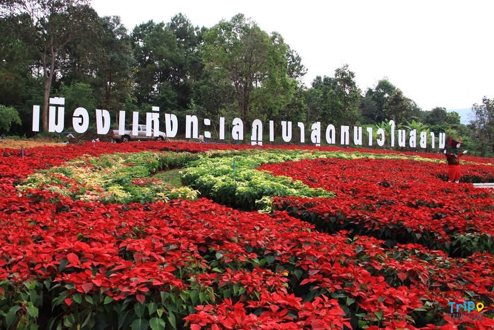 แนะนำสถานที่ท่องเที่ยว ที่เที่ยวเลย Loei (33)