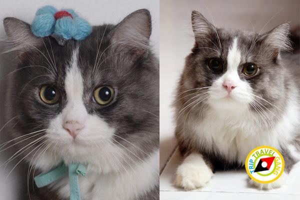 โรคแมว (3)