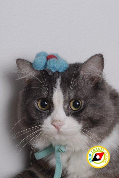 โรคแมว (5)