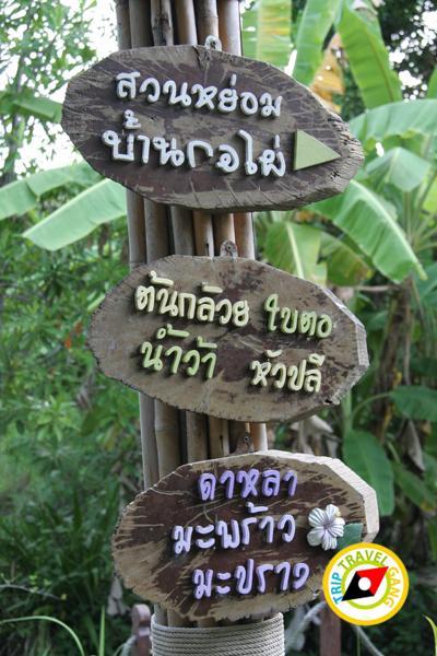 บ้านกอไผ่ อัมพวา สมุทรสงคราม (10)