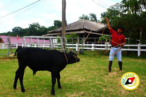 สถานที่ท่องเที่ยวมวกเหล็ก แก่งคอย สระบุรี Travel Guide Muak lek – Kaengkhoi Saraburi (28)