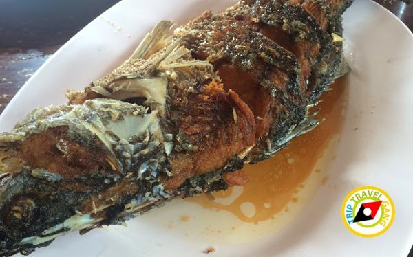 ร้านแดงอาหารทะเล (เจ้าเก่า) แม่กลอง  ที่กิน สมุทรสงคราม แนะนำอร่อย  (1)