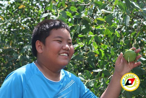 มณีแดง โฮมสเตย์ RedRuby Homestayแหลมสิงห์ จันทบุรี รีสอร์ท โรงแรม ที่พัก กินปู ดูทะเล (1)