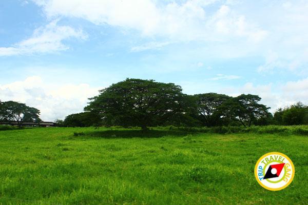 ฟาร์มโคนมไทย-เดนมาร์ค (อสค.) สระบุรี (12)