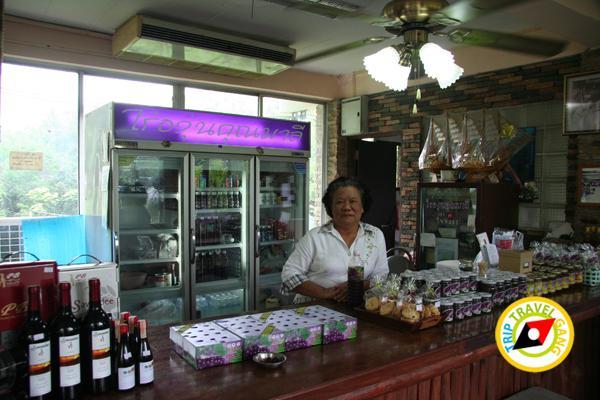 ไร่องุ่นคุณมาลี มวกเหล็ก สระบุรี Khun Malee Grape Farm (2)