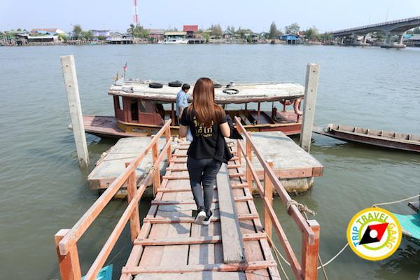 ท่องเที่ยวที่กินเพชรบุรี บางตะบูน บ้านแหลม งานเปิดโลกทะเลโคลน 2559 (1)