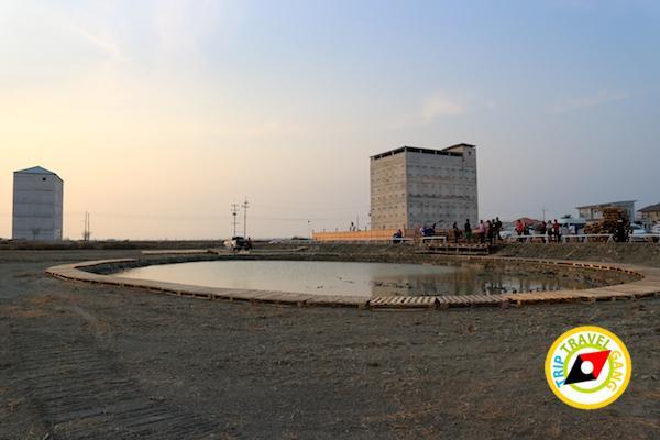 ท่องเที่ยวที่กินเพชรบุรี บางตะบูน บ้านแหลม งานเปิดโลกทะเลโคลน 2559 (20)