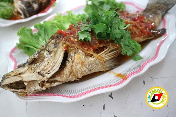 ท่องเที่ยวที่กินเพชรบุรี บางตะบูน บ้านแหลม งานเปิดโลกทะเลโคลน 2559 (22)