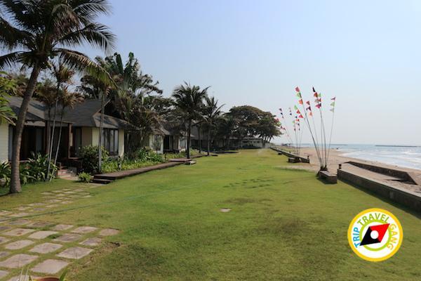 ท่องเที่ยวที่กินเพชรบุรี บางตะบูน บ้านแหลม งานเปิดโลกทะเลโคลน 2559 (25)