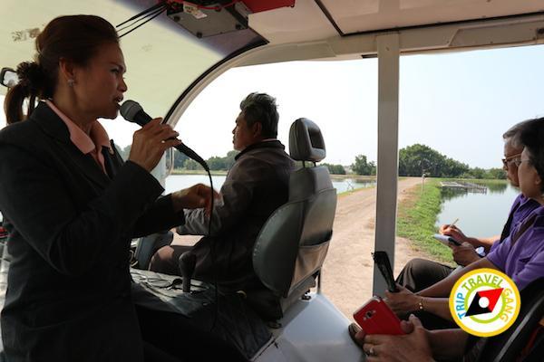 ท่องเที่ยวที่กินเพชรบุรี บางตะบูน บ้านแหลม งานเปิดโลกทะเลโคลน 2559 (27)
