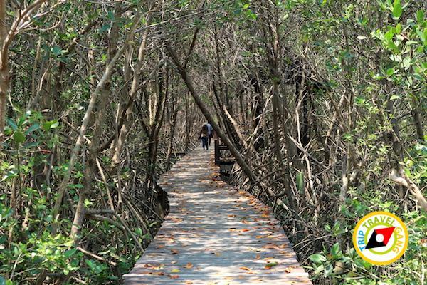 ท่องเที่ยวที่กินเพชรบุรี บางตะบูน บ้านแหลม งานเปิดโลกทะเลโคลน 2559 (29)