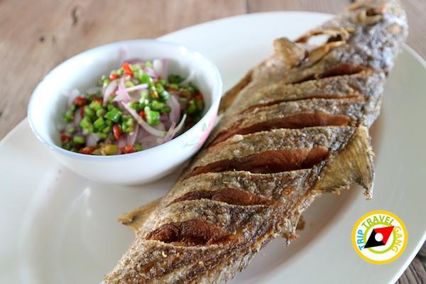 ท่องเที่ยวที่กินเพชรบุรี บางตะบูน บ้านแหลม งานเปิดโลกทะเลโคลน 2559 (32)