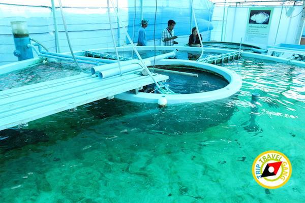 ท่องเที่ยวที่กินเพชรบุรี บางตะบูน บ้านแหลม งานเปิดโลกทะเลโคลน 2559 (35)