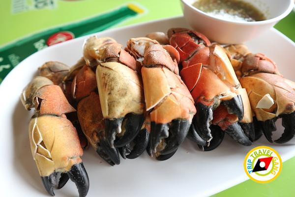 ท่องเที่ยวที่กินเพชรบุรี บางตะบูน บ้านแหลม งานเปิดโลกทะเลโคลน 2559 (8)