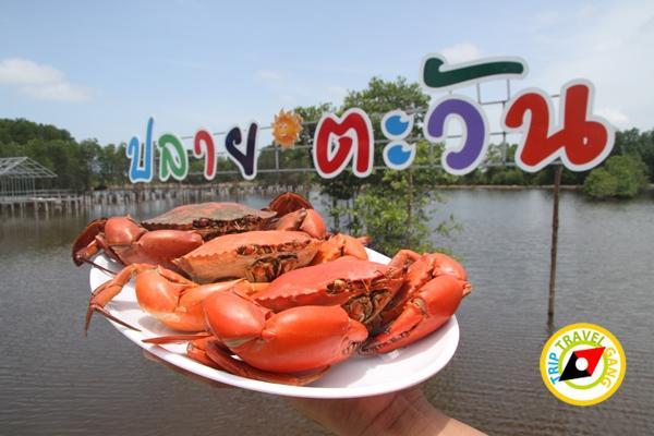 ปลายตะวันโฮมสเตย์ที่พักกินปูจันทบุรี (63)