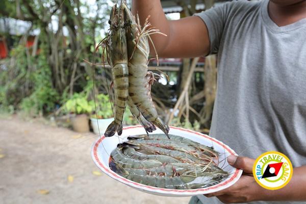 เมืองบางชัน โฮมสเตย์ ที่พักกินปูจันทบุรี (24)