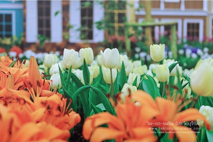 สมรสหวาน ยามทิวลิปบาน อุทยานไม้ดอก เพ ลา เพลิน บุรีรัมย์ 1
