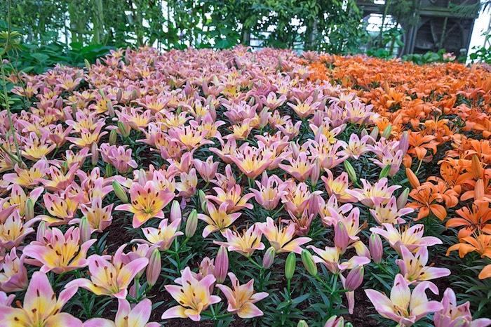 สมรสหวาน ยามทิวลิปบาน อุทยานไม้ดอก เพ ลา เพลิน บุรีรัมย์ 2