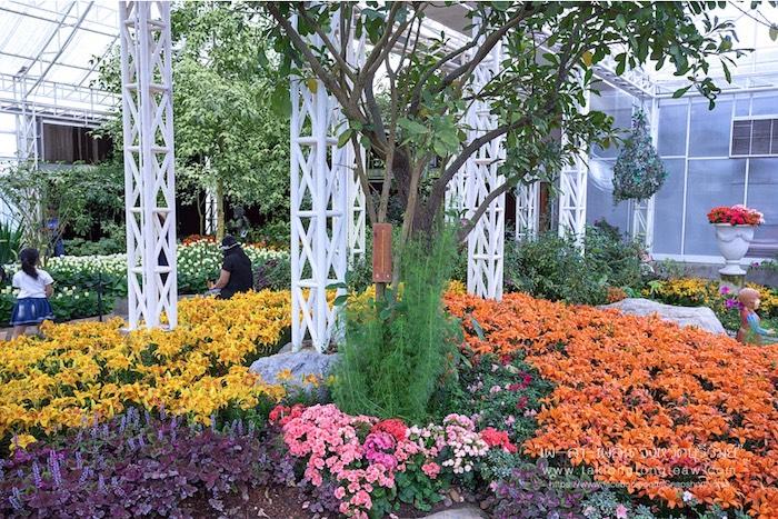 สมรสหวาน ยามทิวลิปบาน อุทยานไม้ดอก เพ ลา เพลิน บุรีรัมย์ 3